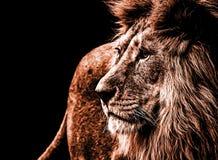 在深黄颜色的狮子画象 免版税库存照片