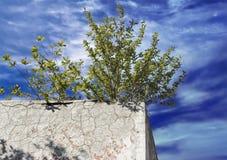 在混凝土墙上的偏僻的绿色灌木 库存照片