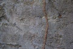 在混凝土墙上的白蚁道路 库存图片