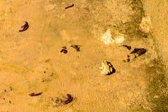 在混凝土的一只青蛙在池塘附近 免版税图库摄影