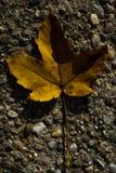 在混凝土的一片黄色叶子 免版税库存照片