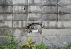 在混凝土的孔 库存照片