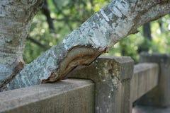在混凝土的树 免版税库存图片