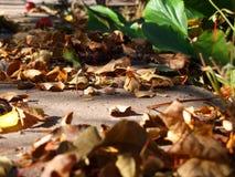 在混凝土的秋叶 免版税库存照片
