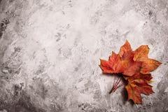 在混凝土的美丽的红色下落的槭树叶子 图库摄影