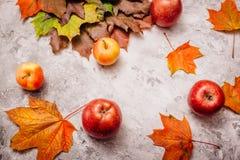 在混凝土的美丽的苹果与槭树叶子 免版税库存图片