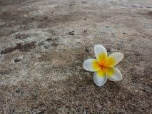 在混凝土的花 库存照片