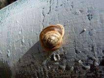 在混凝土的蜗牛壳 免版税库存图片