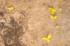 在混凝土的金黄花秋天 免版税库存图片
