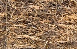 在清早光的冷的干草 免版税库存图片