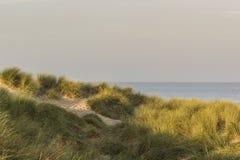 在清早光的沙丘 免版税库存照片