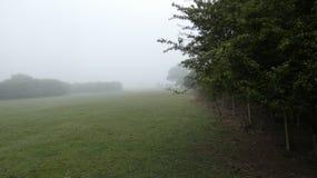在清早有薄雾的英国春天草甸6的距离的鹿 免版税图库摄影