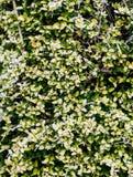 在清早盖的秋天/冬天叶子地面霜 免版税库存图片