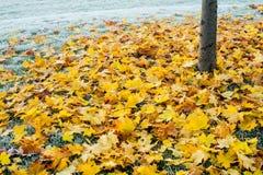 在清早盖的秋天/冬天叶子地面霜 库存图片