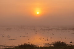 在清早薄雾的日出 免版税库存照片