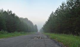 在清早路2的雾 免版税库存照片