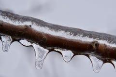 在清楚的冰报道的详述的树枝在冻雨以后 免版税图库摄影