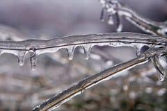 在清楚的冰盖的树枝杈在冻雨以后 免版税库存图片