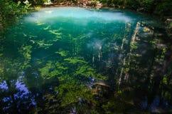 在清楚的大海的森林反射 免版税图库摄影