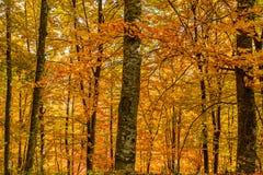 在清楚的天空背景的秋叶 autu水平的看法  免版税库存照片
