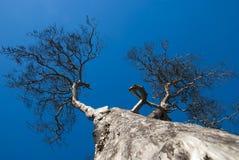 在清楚的天空背景的死的树 库存照片