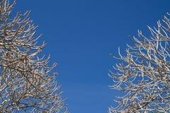 在清楚的蓝天背景的大树枝框架 免版税库存图片