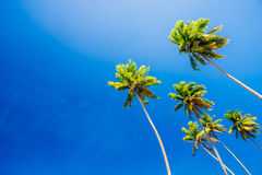 在清楚的蓝色夏天天空的棕榈树 免版税图库摄影