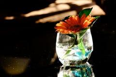 在清楚的玻璃的一朵花 免版税库存照片