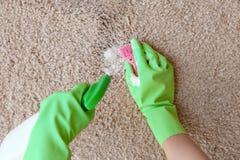 在清洗地毯的橡胶手套的手与海绵 库存照片