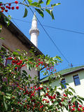 在清真寺旁边的樱桃树 免版税库存照片