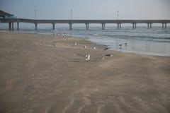 在渔码头旁边使鸟和鸥靠岸 库存图片