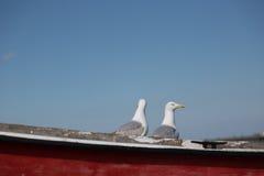 在渔船的两只海鸥姿势 免版税库存图片