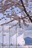 在温哥华口岸终端的樱花 加拿大 库存图片