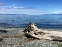 在温哥华岛海岸线的漂流木头树桩与享受天的皮艇 免版税图库摄影