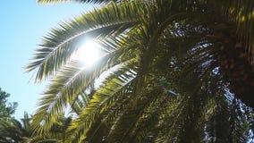 在温暖的南部的一个晴天 太阳` s光芒通过棕榈树的叶子做他们的方式 慢动作 股票录像