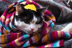 在温暖的围巾和秋叶包裹的猫 免版税库存图片