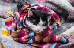 在温暖的围巾和秋叶包裹的猫 图库摄影