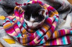 在温暖的围巾和秋叶包裹的猫 免版税库存照片