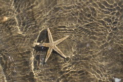 在温暖的热带海水下的壮观的海星 免版税库存图片