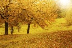 在温暖的秋天太阳的风景充满活力的秋天乡下风景 免版税库存图片