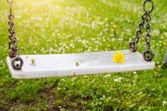 在温暖的晴朗的光的被放弃的摇摆与在春季的花 免版税库存照片