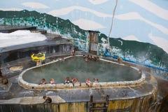 在温泉函馆,日本在参议员的,日本雪猴子短尾猿 库存图片