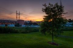 在港口日落的孤立树 免版税库存照片