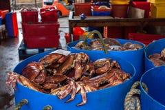 在港口的螃蟹 奥克尼,苏格兰 图库摄影