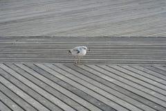 在港口的鸟身分 免版税库存照片