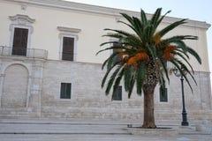 在港口附近选拔在正方形的成熟棕榈树在特拉尼,普利亚,意大利 免版税库存图片