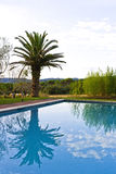 在游泳池反映的棕榈树 库存图片