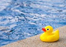 在游泳池旁边的橡胶鸭子 库存图片