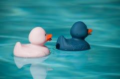 在游泳池的桃红色和蓝色橡胶鸭子玩具 库存图片