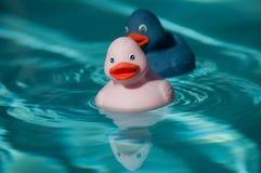 在游泳池的桃红色和蓝色橡胶鸭子玩具 免版税库存图片